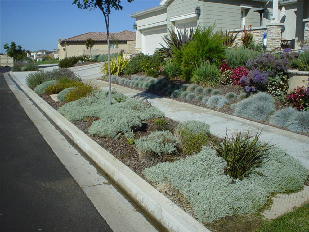 Parking strip snow in summer for Small front garden ideas with parking