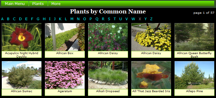 Aquatic Plants With Common Names